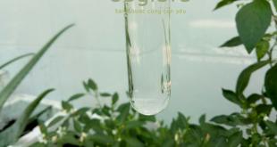 Tinh dầu tràm nguyên chất nổi trên mặt nước